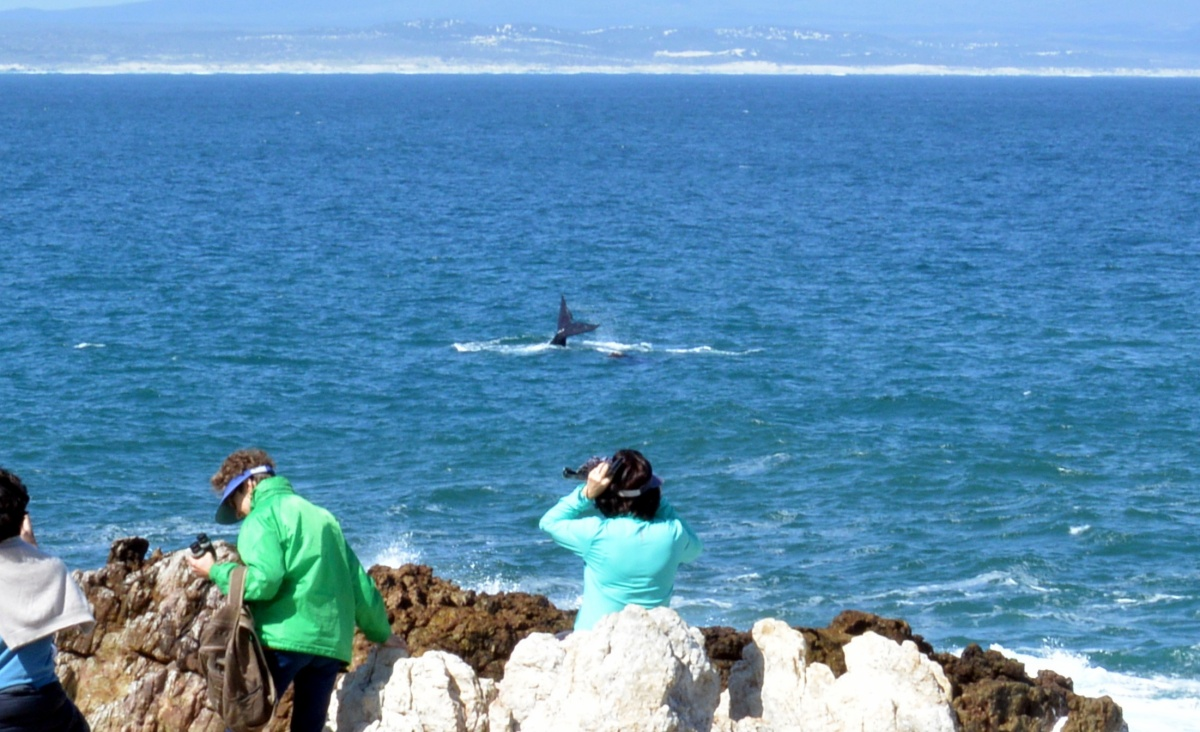 Whale Watching Onshore